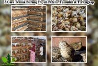 √ 5 Cara Ternak Burung Puyuh Petelur Temudah & Terlengkap
