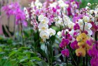 √ 7 Cara Budidaya Bunga Anggrek Terlengkap