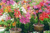 √ Cara Menanam Bunga Kertas Terlengkap