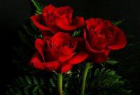 √ 5 Cara Budidaya Bunga Mawar Terlengkap