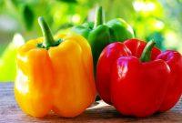 √ 9 Cara Menanam Paprika Terlengkap