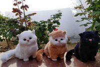 √ 7 Cara Budidaya Kucing Persia Terlengkap