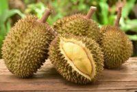 √ 5 Cara Menanam Buah Durian Terlengkap