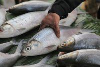 √ 5 Cara Budidaya Ikan Bandeng Terlengkap