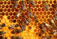 √ 5 Cara Budidaya Lebah Madu Terlengkap